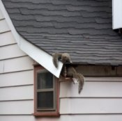 Squirrel Control Services in Slidell LA